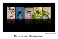 Birds of Curacao Book Cover